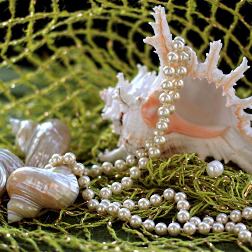 raznoe-rakushki-korally-dekorativnye-spa-641848